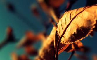 autumn-dry-leaf-facebook-cover